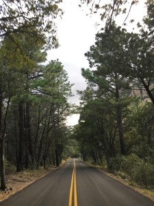 The park road through the pine forest up to Massai Point