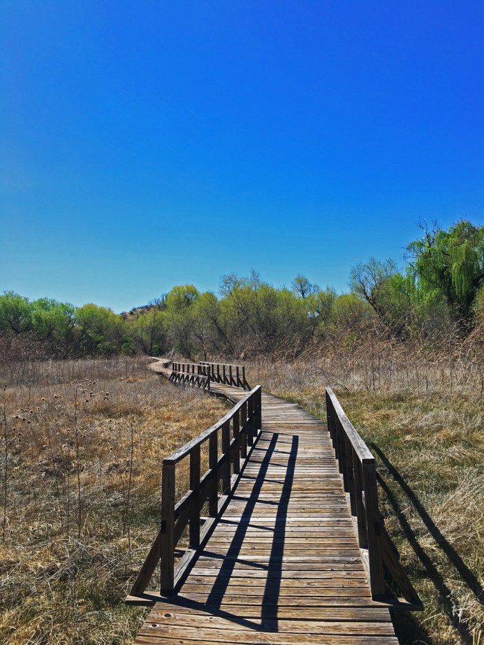 Boardwalk with railing over the wetlands at Arivaca Cienega