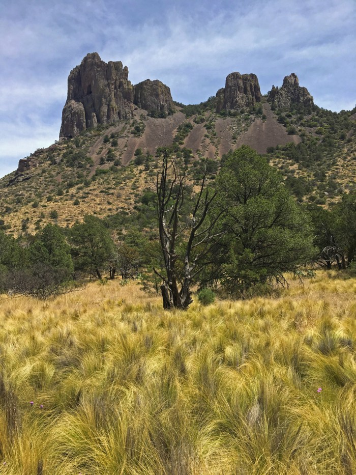 Bunchgrass and mountaintop pinnacles on the Pinnacles Trail in Big Bend National Park