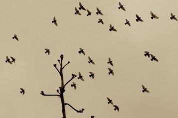 Flock, Windansea, Ca