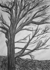 2014-albero-20x30-chinacarboncino-730x1024