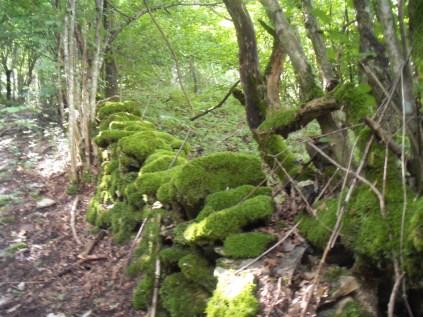 2014-Alpe-Orocco 012 (1024x768)