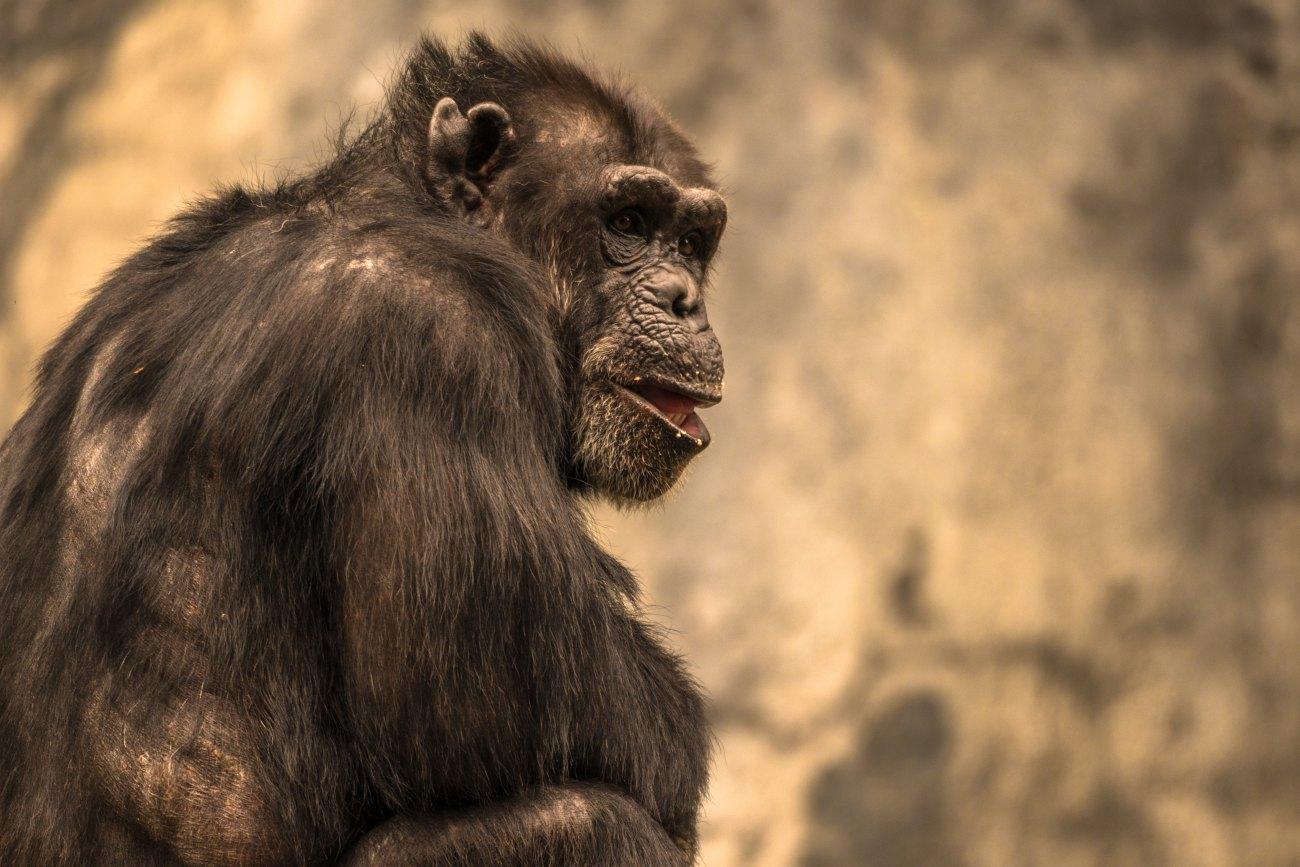 эволюционная психология