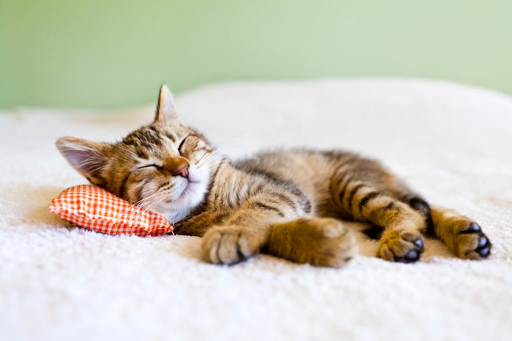 Kako da se naspavate