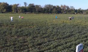 students sampling plants in a field