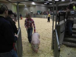 student leaving the arena with a hog