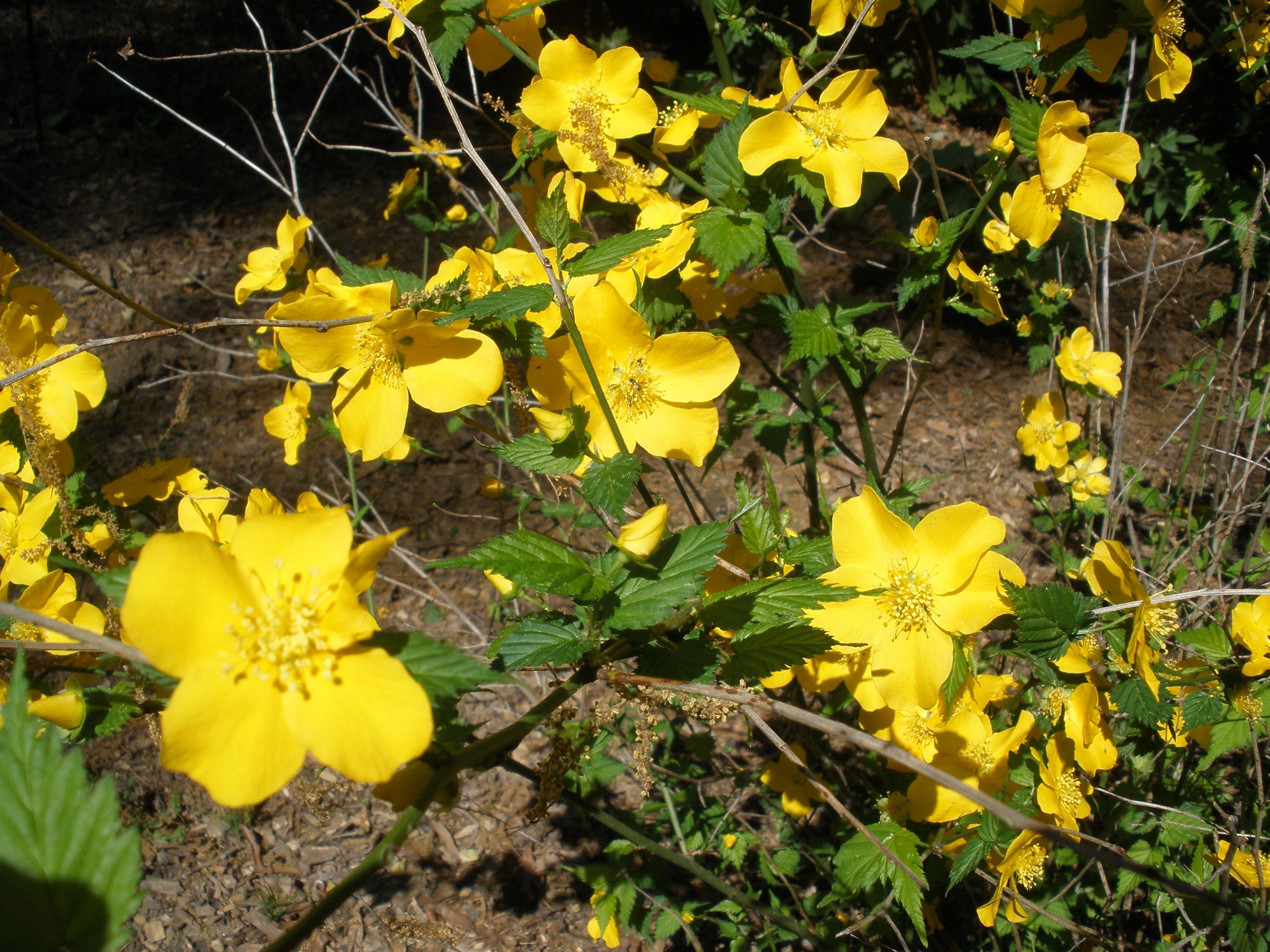 Spring color 2012