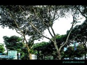 Singapore in my eyes.004