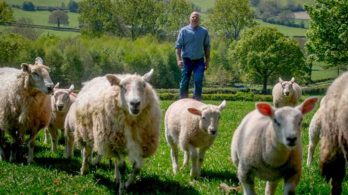 Tesco new contracts for lamb farmers