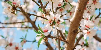 KIND commits to exclusively source almonds from Bee-friendly farms