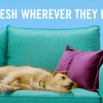 """Febreze calls on dog owners to """"Say Up to Your Pup"""""""