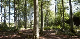 IKEA launches new 2030 forest agenda for improved forest management