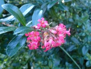Royal-botanical-gardensa010716.9