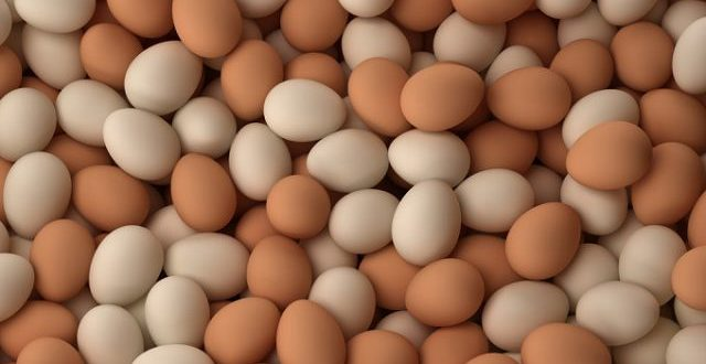 Lagos State Daily Egg Consumption Reaches 20 million - Brand Spur