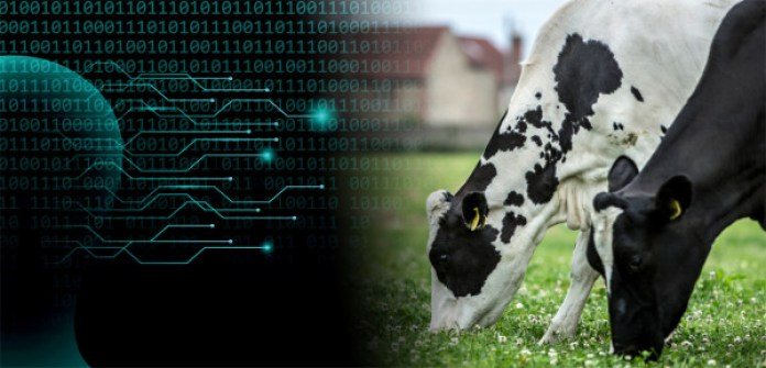 New artificial intelligence tool predicts how much milk 1,5 million cows will produce - Brand Spur