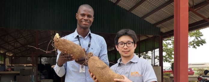 IITA BIP team sets new production per hectare record for Yam Farmers in Nigeria - Brand Spur