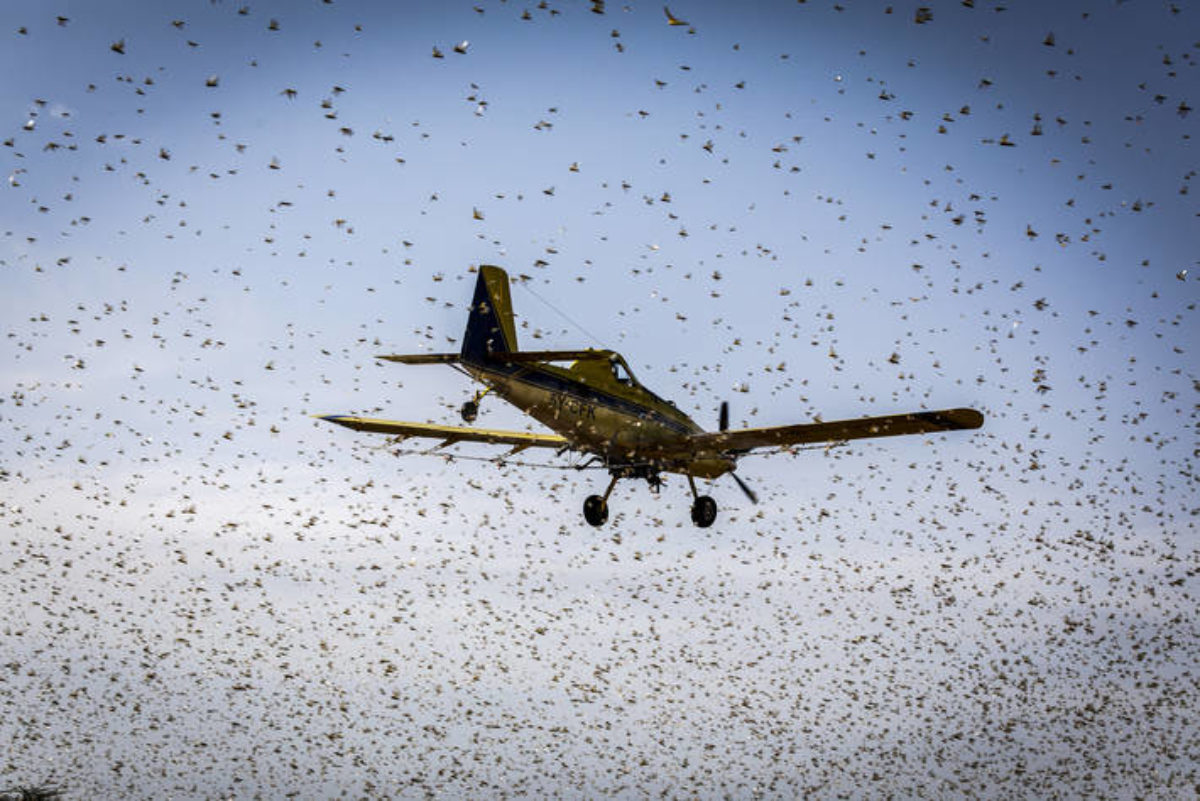 Kenya is likely to become free from desert locusts in the near future thanks to roll-out of robust containment measures, a senior official from the Food and Agricultural Organization of the United Nations (FAO) said on Tuesday. Cyril Ferrand, FAO's resilience team leader for East Africa, said that Kenya and other Horn of Africa nations […]
