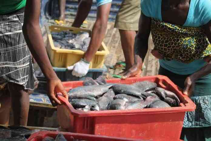 Ogun State facilitates more capital to boost Fish Production
