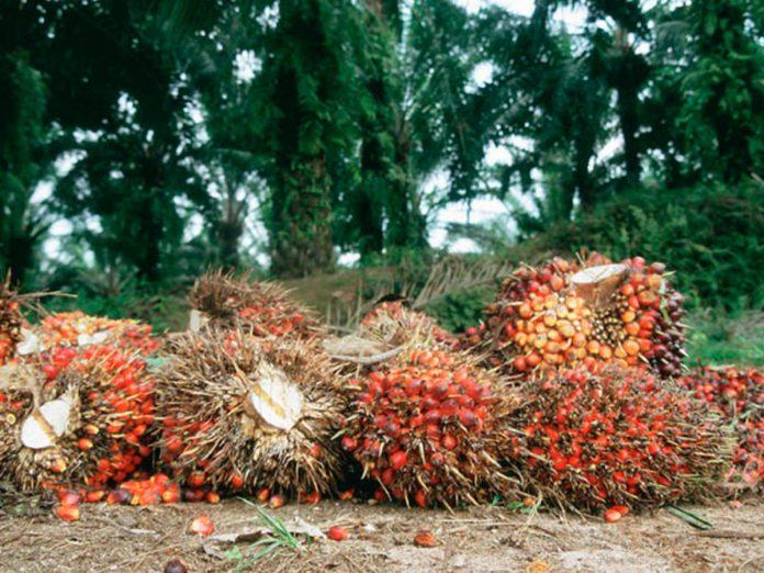 Okomu Oil Plc: Brighter days ahead