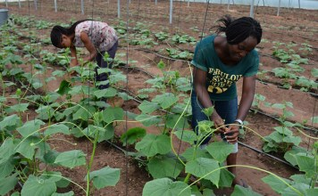 Study Shows Way To Influence Youth Performance In Agripreneurship-Brand Spur Nigeria