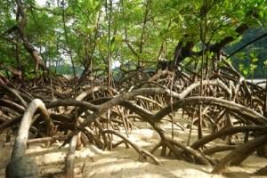 family tree roots