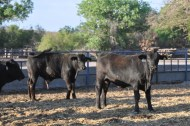 toretes rancho tarahumar - 05