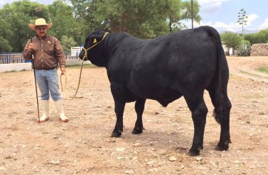 RTH MR Affirmed-Bright Side 518-5, 17 meses