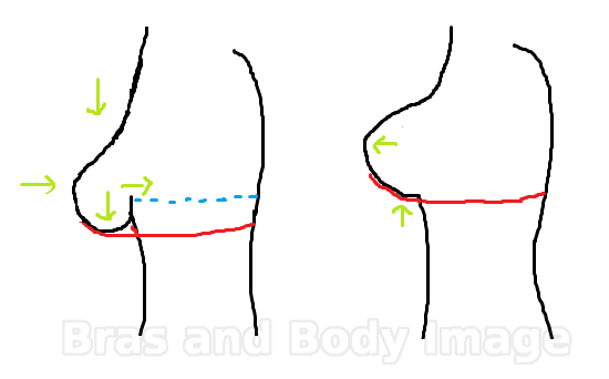 Diagram showing what a properly adjusted bra does (right), compared to a unadjusted bra (left). http://brasandbodyimage.com/2012/09/05/putting-your-bra-on-properly/