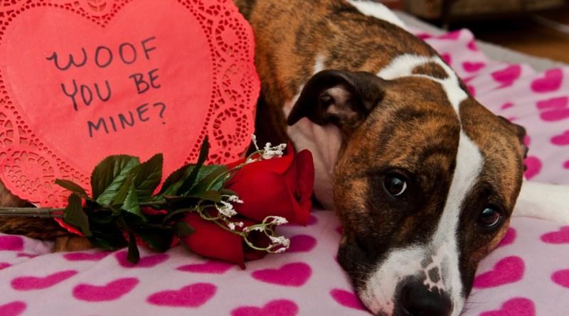 A História do Valentines Day (atualizado 2020)