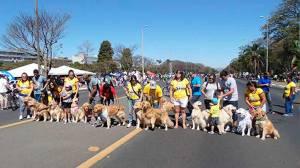 Domingo, no Eixão Sul, recene evento dedicado aos nossos amigos de 4 patas