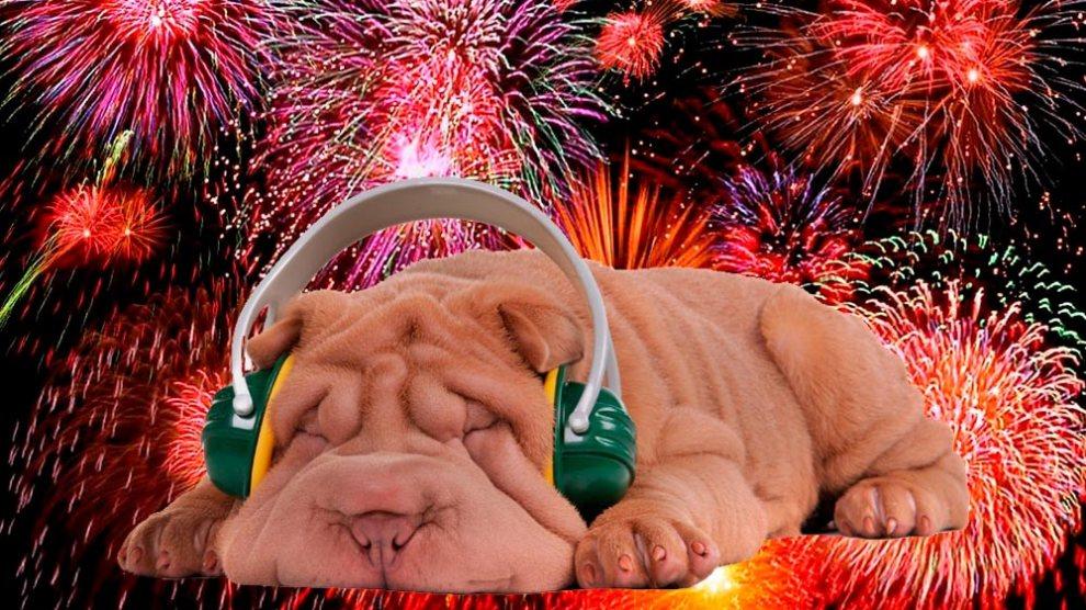 Saiba como proteger seus pets dos fogos de artifício