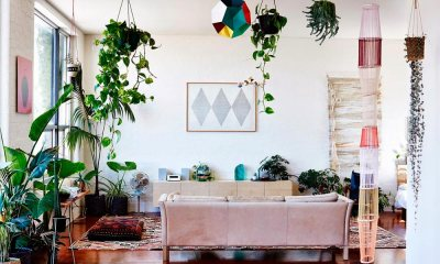 Veja como deixar sua casa mais aconchegante com plantas
