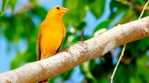 Criadores de pássaros