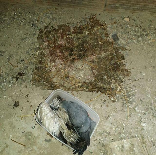 Dedetização de baratas em Contagem
