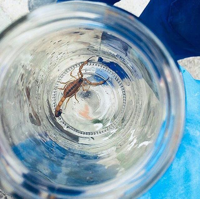 Dedetização de insetos em Contagem