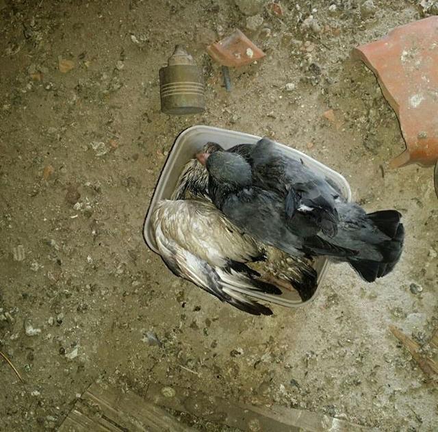 Dedetização de ratos em Contagem