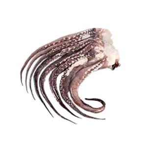 foto Tentáculos de Potas Congelado 1kg