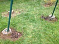 Les houblons plantés au printemps 2016, protégés de la tondeuse maléfique par des piquets en bois