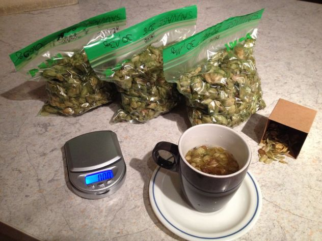 Un petit thé au houblon rapidement pour avoir une première idée des arômes et saveurs de cette résolte 2016 de houblon sauvage bas-rhinnois