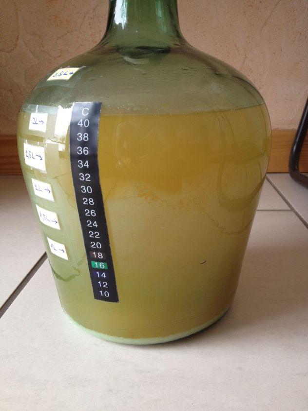 Après bientôt un mois de fermentation l'hydromel commence à se clarifier doucement