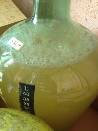 Mon expérience d'hydromel simple avec la levure M-05 se déroule comme prévu, la fermentation est très active