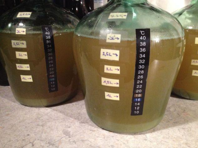 Après une nuit à la cave le moût de miel à décanté et refroidi, il est prêt pour l'ensemencement aux levures à vin