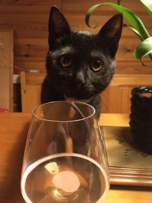 Dégustation bière crue n°1 après un mois en bouteille + petit chat noir curieux - Brasserie du Vallon