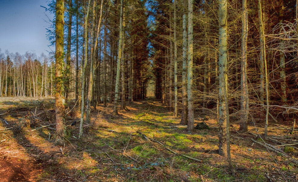 Skoven - et kig