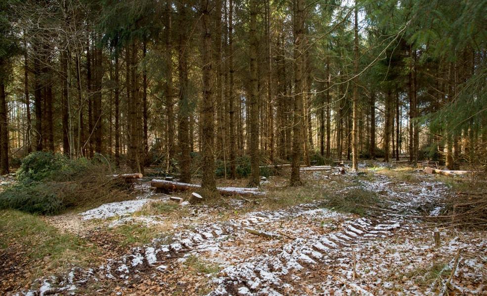 Der arbejdes i den vinterklædte skov