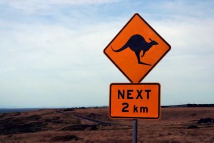 10 coisas que provavelmente você não sabia sobre Cangurus | BRaustralia.com