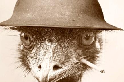 Sabia que a Austrália já declarou guerra às Emas? (e perdeu!)