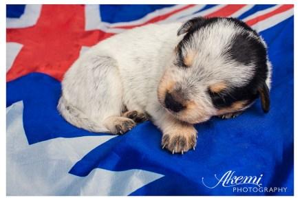 Saiba como levar o meu animal de estimação para a Austrália | BRaustralia.com