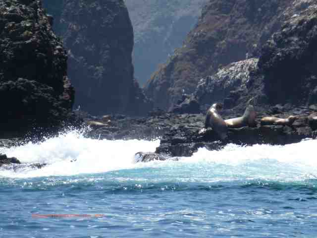 sea lions sunning themselves at Channel Islands national park