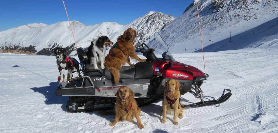 a basin avalanche dogs